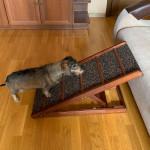 Пандус для собак прикроватный складной с регулируемым наклоном МИНИ